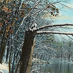 Walden in Winter (Arching Limb)