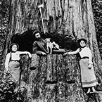 On the Spring Boards and in the Undercut, Washington Bolt Cutter and His Daughters